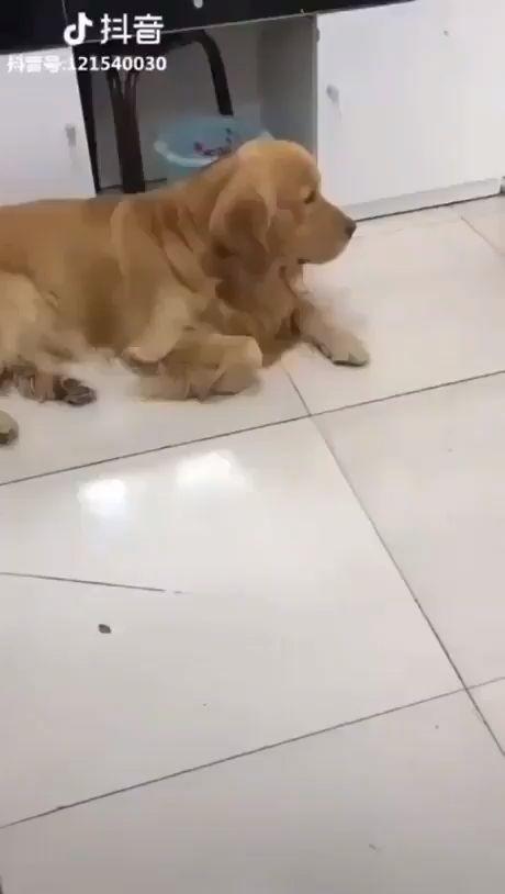 Preciosos perro cuidando de un pequeño gato