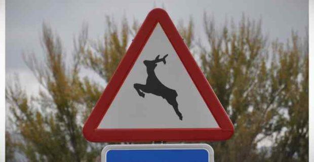 Image01 3 620x320 - Aprende lo que quiere decir esta señal de tráfico con un vídeo...