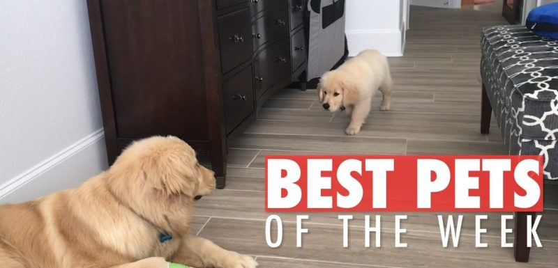 Divertidos vídeos de animales de esta semana (Nov2) 1