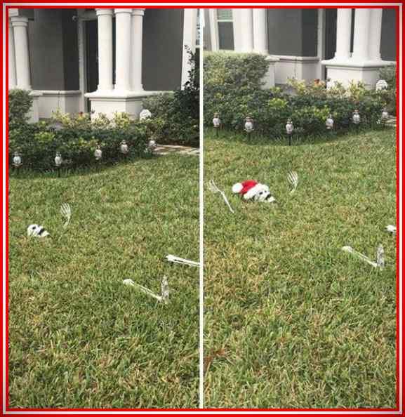 Imágenes de la Navidad de gente muy vaga. 3