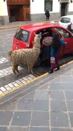 Vídeo de la llama que se sube a un taxi