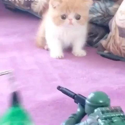 Mira que carita de asustado pone este precioso gatito. 2