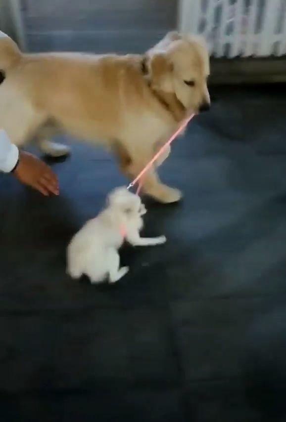 vídeos de animales para whatsapp