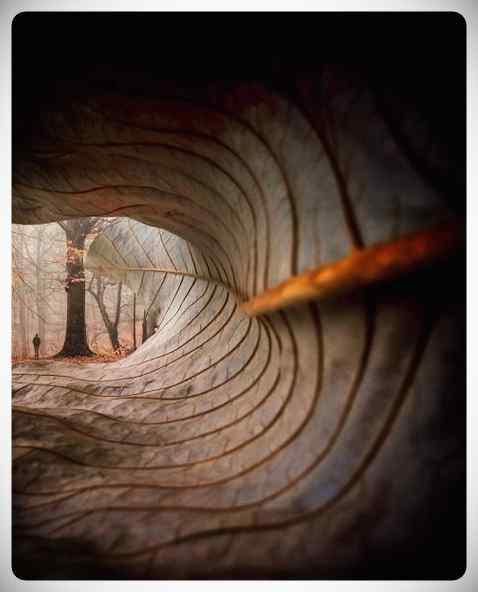 Efectos visuales e ilusiones ópticas para tus fotos. 6