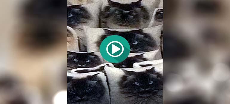 Encuentra al gato entre tantos cojines. 4