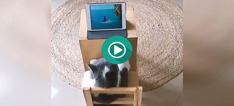 Este gato esta disfrutando de su serie favorita de dibujos animados. 5