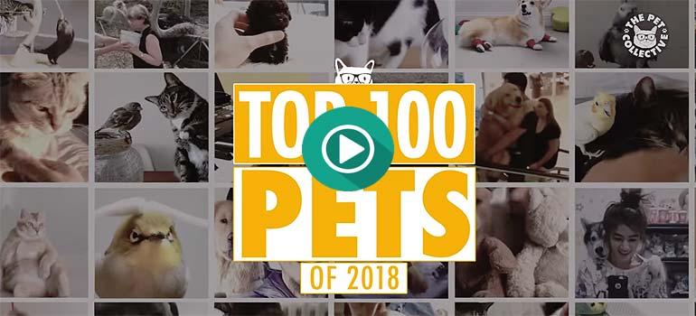 Los mejores vídeos de mascotas del 2018 (1 parte) 22