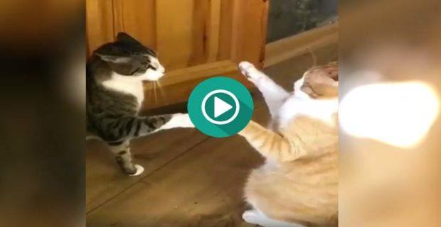 video divertido gatos 620x320 - Este gato sabe hacer el toque de la muerte de Bruce Lee.