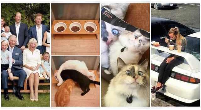 Imágenes graciosas para Whatsapp. 10 fotos llenas de humor. 4