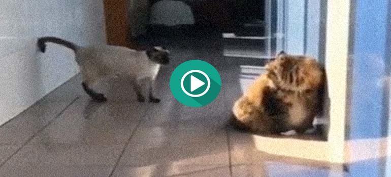 El Gato Ninja vs La Oveja Ninja, no te pierdas los vídeos. 4