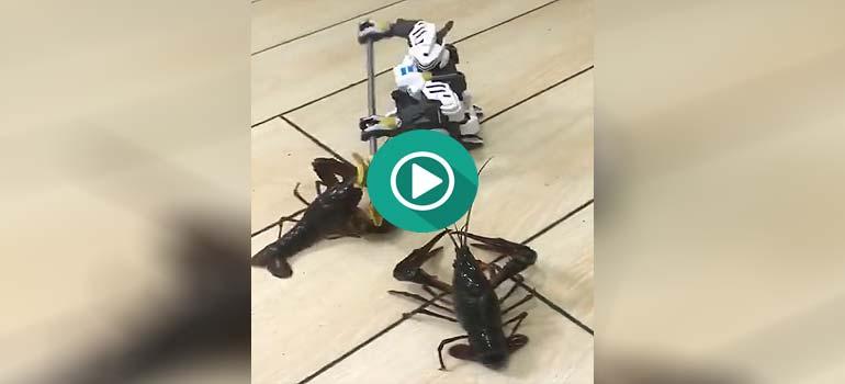 Combate a muerte entre dos langostas y un robot. 2
