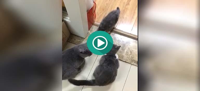 Mama gato pone en sus sitio a papa gato. 3