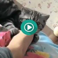 Creo que a este pobre gato no le ha gustado el sabor del pie de su dueño.