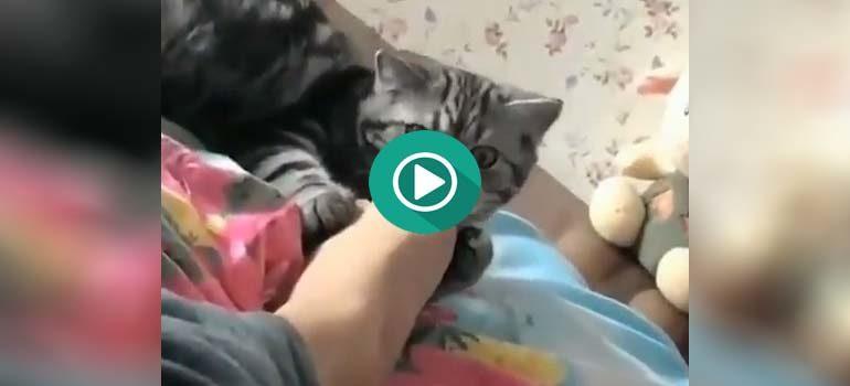 Creo que a este pobre gato no le ha gustado el sabor del pie de su dueño. 1