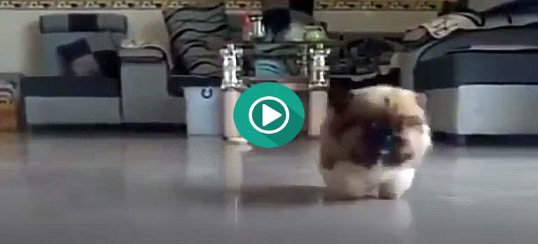 Perros graciosos, este del vídeo sabe que es Viernes.