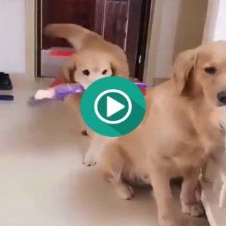 Este perro quiere pedir perdón a su chica.