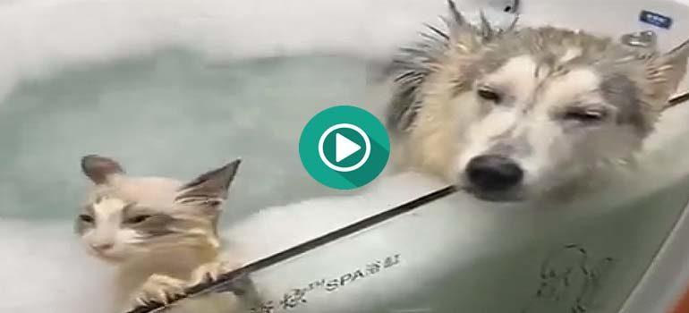 Un perro y un gato disfrutando de un relajante baño. 2