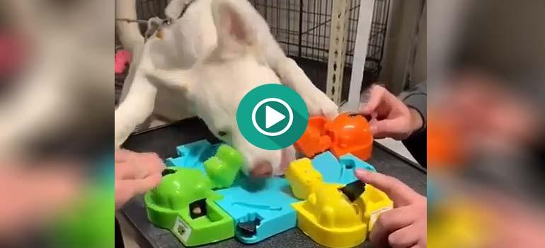 Si juegas al Tragabolas con tu perro, tienes la partida perdida. 1