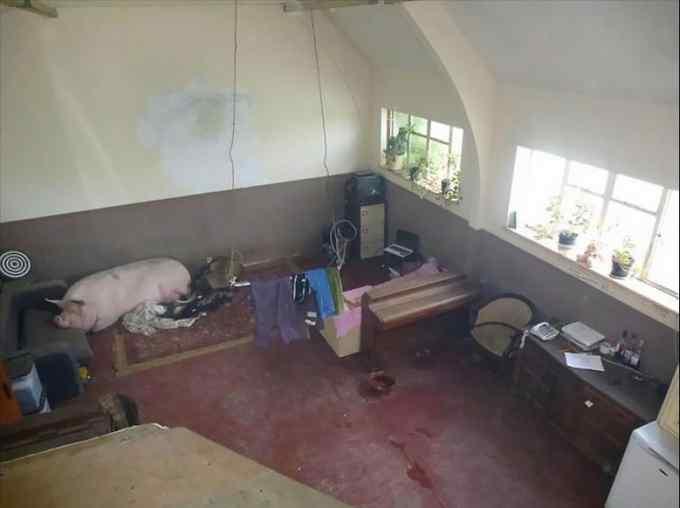 Las fotos mas extrañas de gente que vende su casa. 18