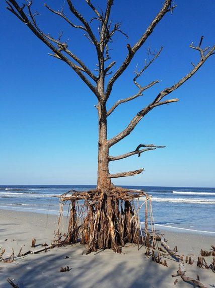 Desastres naturales, el poder de la naturaleza. 10