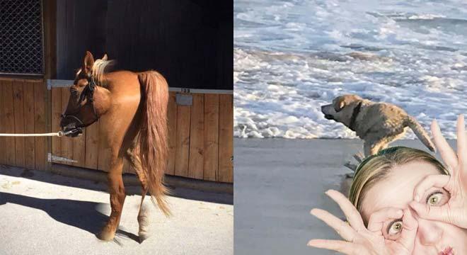 Divertidas fotos panorámicas con animales que no han salido bien. 1