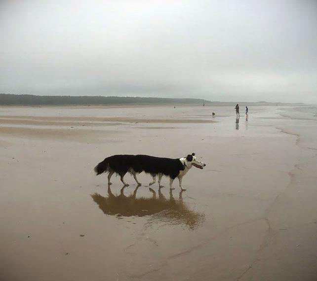 Divertidas fotos panorámicas con animales que no han salido bien. 13