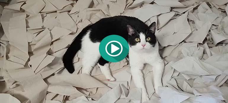 El vídeo del gato y la habitación llena de papel que se ha vuelto viral. 2