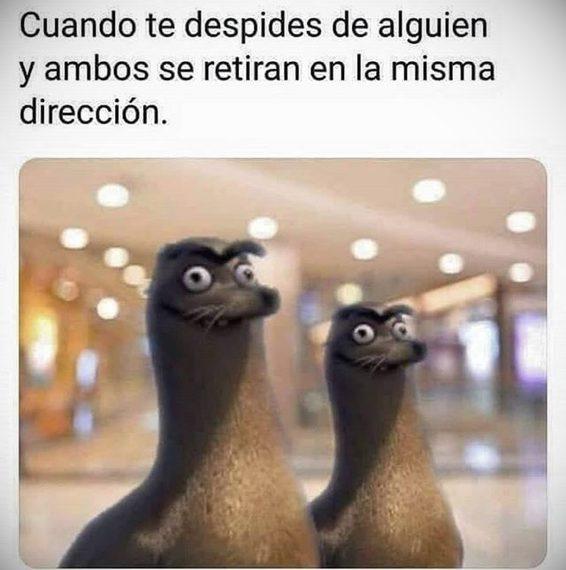 Domingos de relax y memes. 1