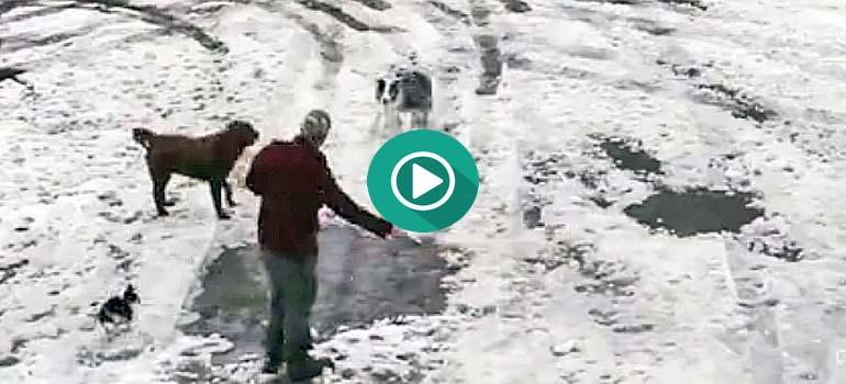 Este perro salva a un cachorro de ser atropellado. 1