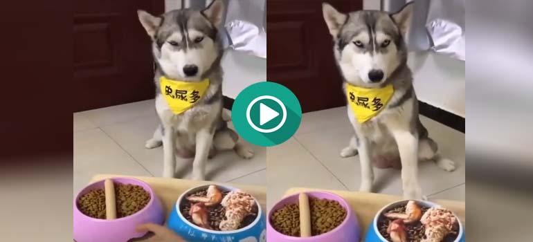 Mira que cara pone el perro cuando descubre que lo han engañado. 4