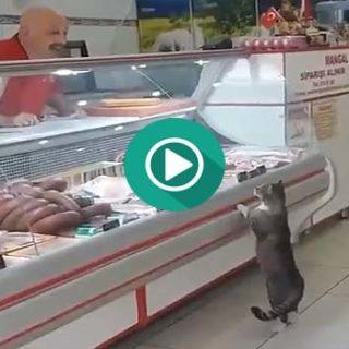 Este gato va a comprar el solo.