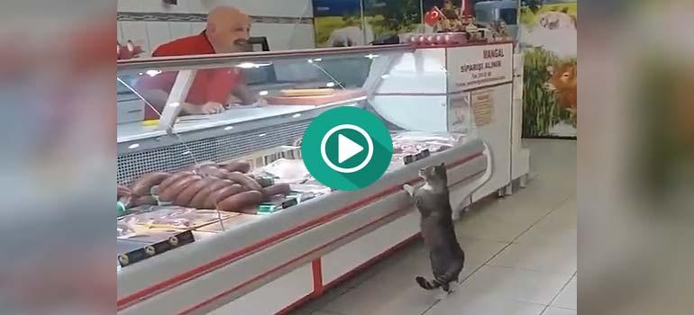 Este gato va a comprar el solo. 1