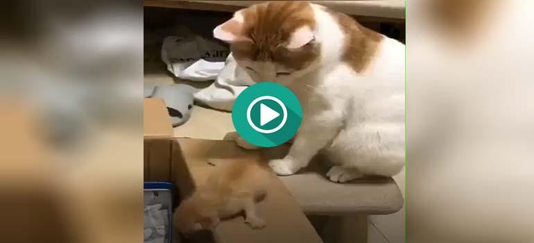 Amor de madre, al estilo de los gatos.