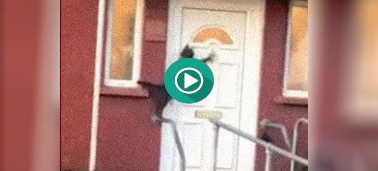 El vídeo del gato que llama a la puerta. 2