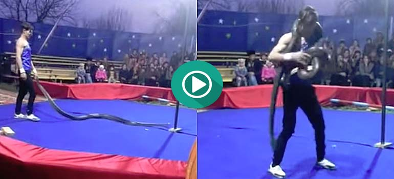 Espectáculo de Circo con una serpiente no termina nada bien. 1