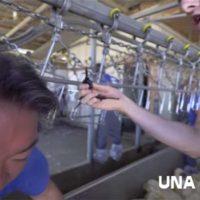 Activistas por los derechos de los animales se encadenan en una granja y descubren que ha sido todo un error.