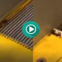 Una cucaracha corre por su vida en unas escaleras mecánicas.