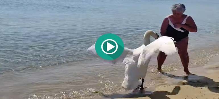 El Cisne no quiere fotos y ataca a la pobre abuela. 1