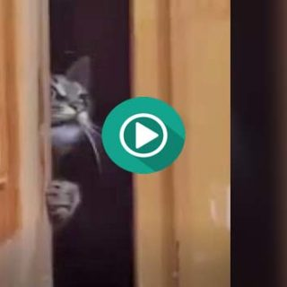 Cuando escuchas voces en la escalera y te asomas a ver que pasa.