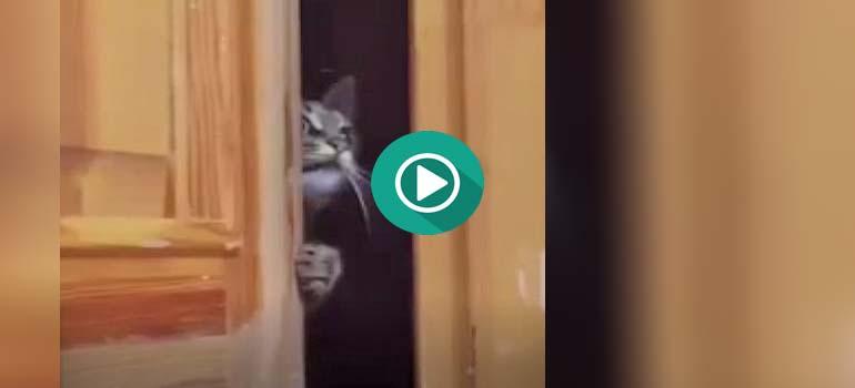 Cuando escuchas voces en la escalera y te asomas a ver que pasa. 1