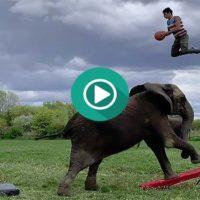 Jugando y pasándolo en grande con un Elefante.