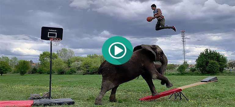 Jugando y pasándolo en grande con un Elefante. 2