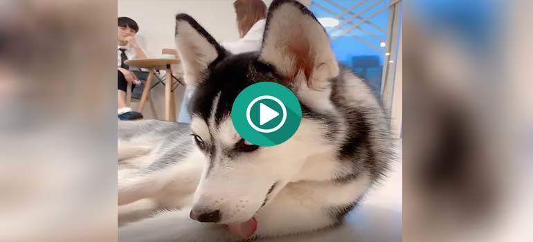 Solo espero encontrar a alguien que me mire como mira este perro del vídeo. 3