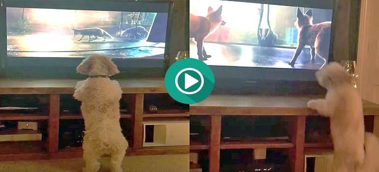 Divertido vídeo de un perro viendo en la tele una peli y no veas como se lo pasa. 1