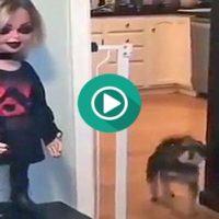 Menudo susto se lleva el pobre perro con esta muñeca tan siniestra.
