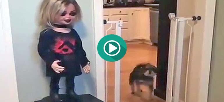 Menudo susto se lleva el pobre perro con esta muñeca tan siniestra. 3