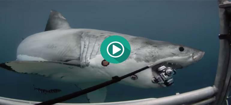 Un gran tiburón se come una cámara de 360º 5