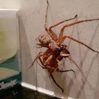 Una araña contra una cucaracha, el vídeo del día.