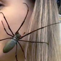 Con una araña tejedora gigante en la cara.