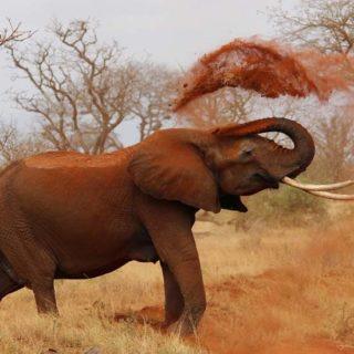 Un Elefante enfadado, ataca un coche lleno de turistas.